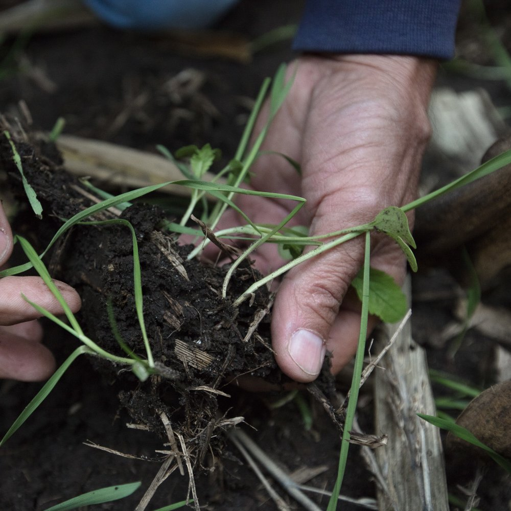 Tim Smith Roots of Conservation hands soil