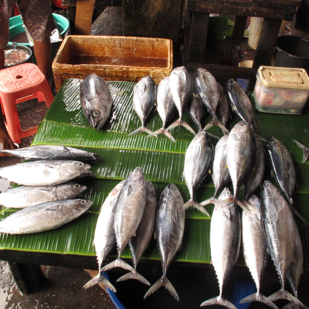 Indonesia fisheries lede.JPG