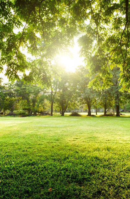 Trees in park with green grass field