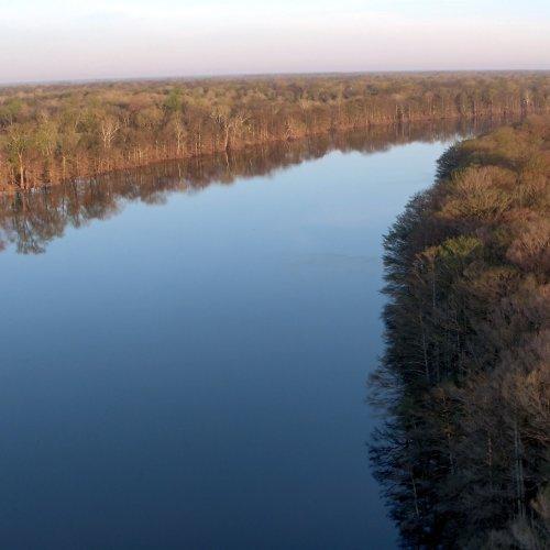 Mississippi River Delta Timber Scenic