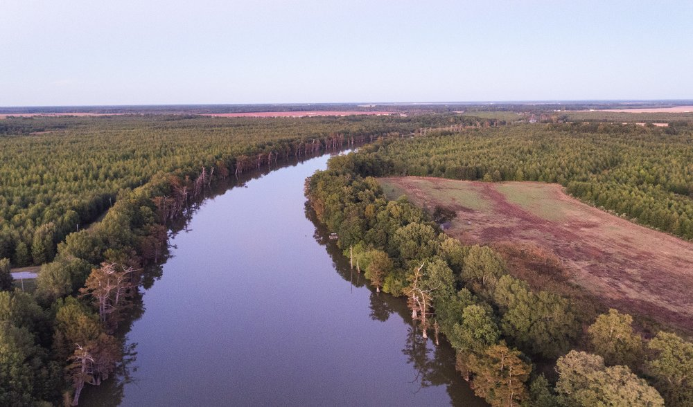 From Farmland to Forest in the Mississippi Delta