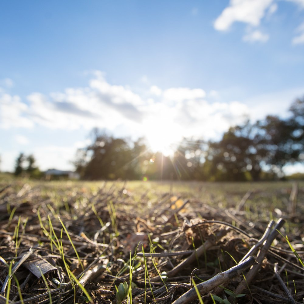 Ray_MCcormick agriculture field of grass