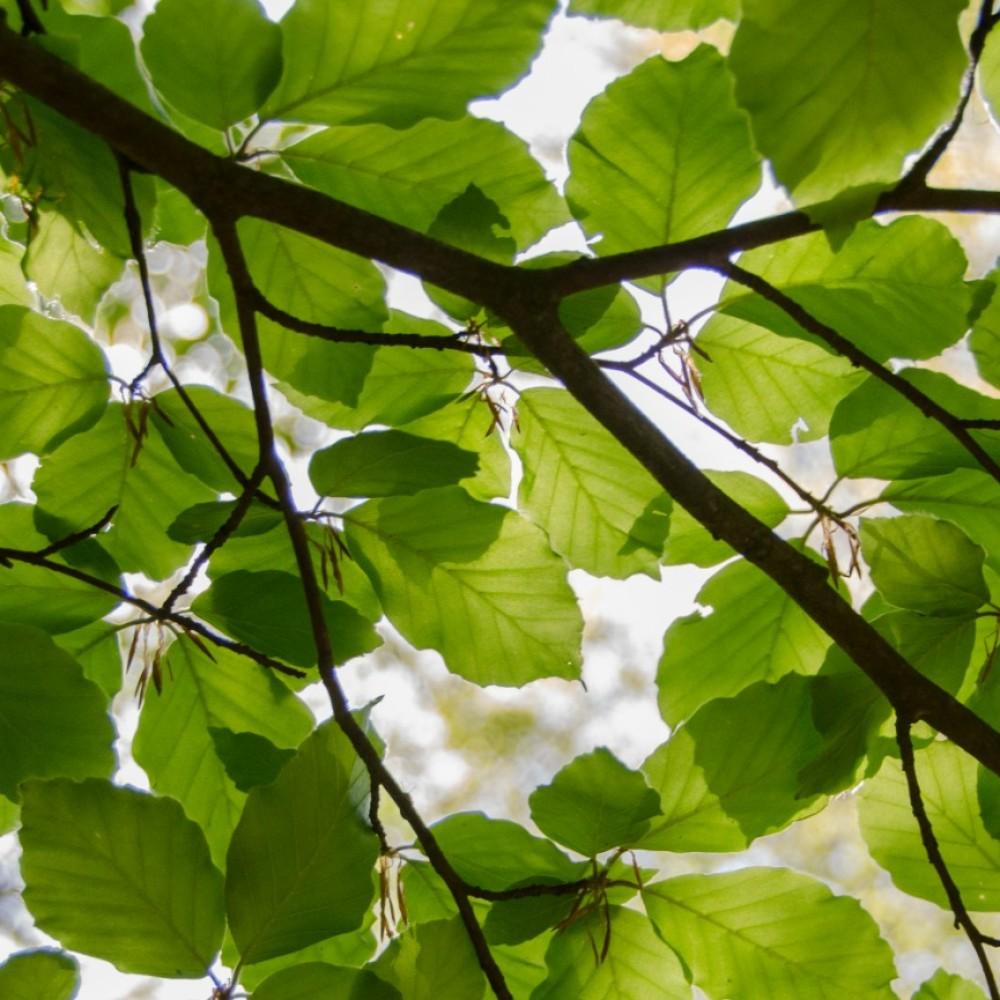 tree-canopy-hero.jpg