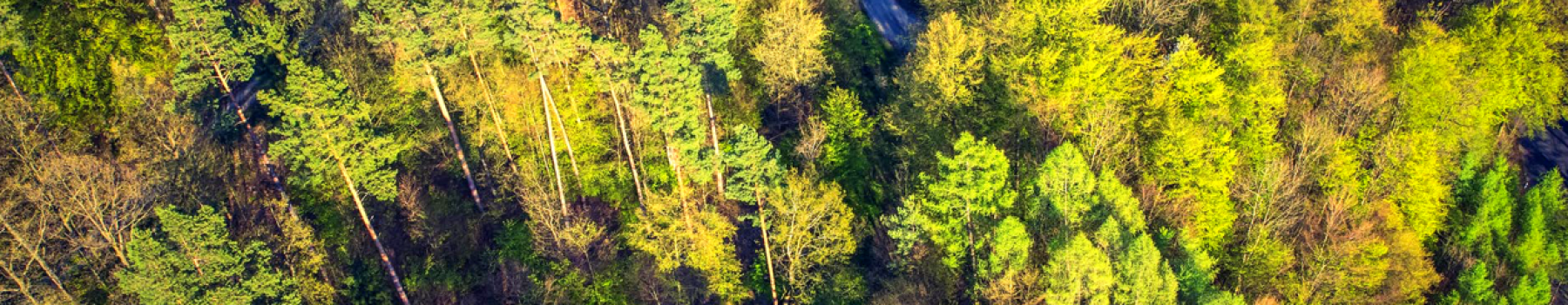 Environment Promo Image